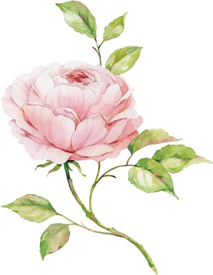 rosa-unica